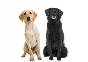 Zwei Hunde sitzen nebeneinander