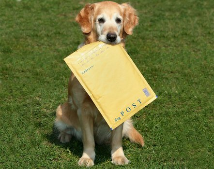 Hund bringt Post