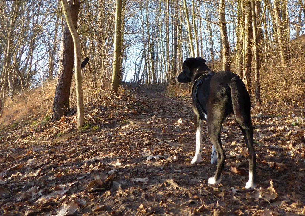 Hundephysiotherapie selber machen